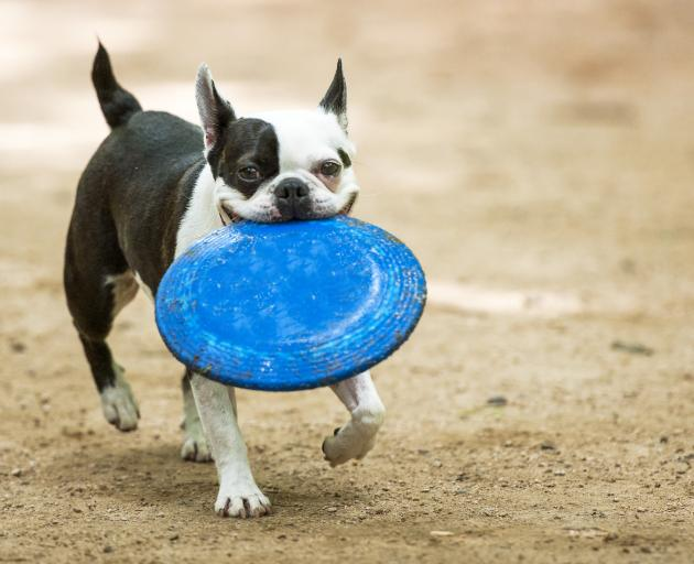 A new dog park will open at McHughs Forest Park in Darfield. Photo: Getty Images