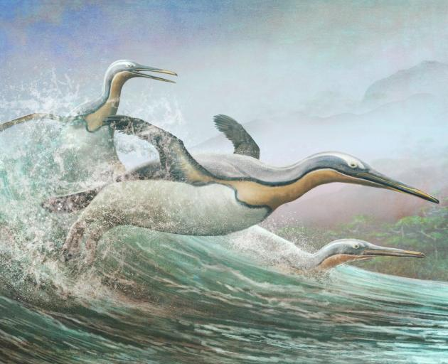 The giant penguins, like these Kumimanu, that lived in Aotearoa New Zealand around 60 million...