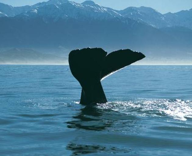 Whale Watch Kaikoura NZH is getting a $1.5 million bailout to stay afloat while the borders are...