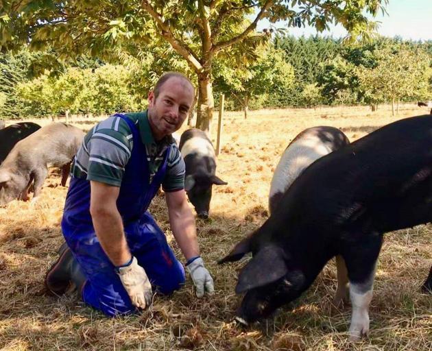 Josh Hill checks up on his pigs at his Poaka Free Range Pigs farm. PHOTO: SUPPLIED BY JOSH HILL