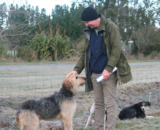 North Island farm manager Struan Currie takes an instant shine to 4-year-old huntaway Ted.