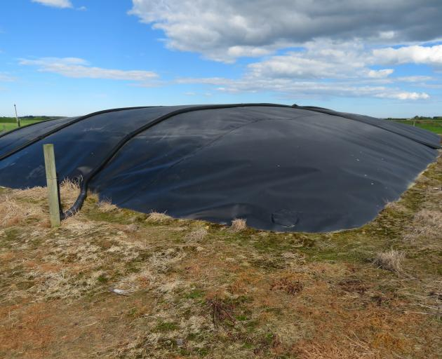 Effluent from a 900-cow dairy shed at Isla Bank is pumped into this pond, which is covered with a...