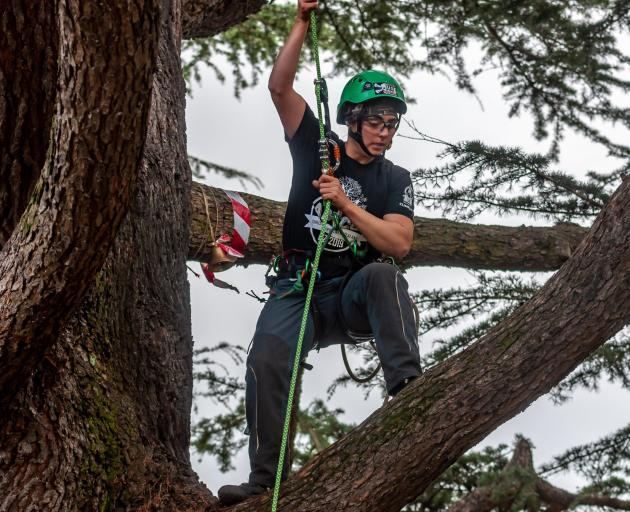 Competitive climbers are coming to the Ashburton Domain next month. Photo: Richard Tregoweth.