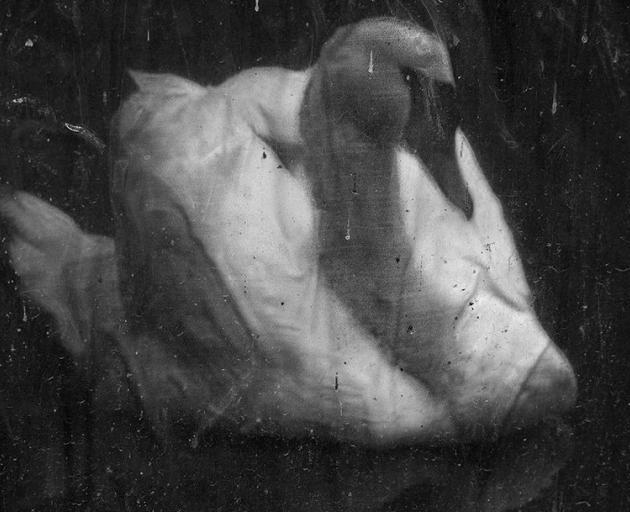 To Die in Music (Swan), by Justin Spiers