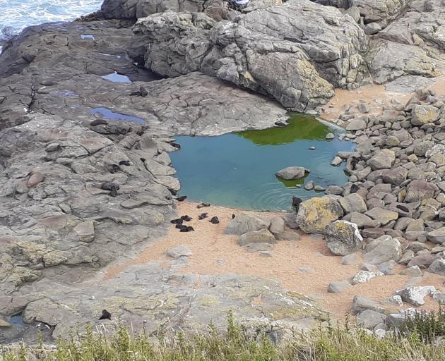Fur seals gather around a rock pool.