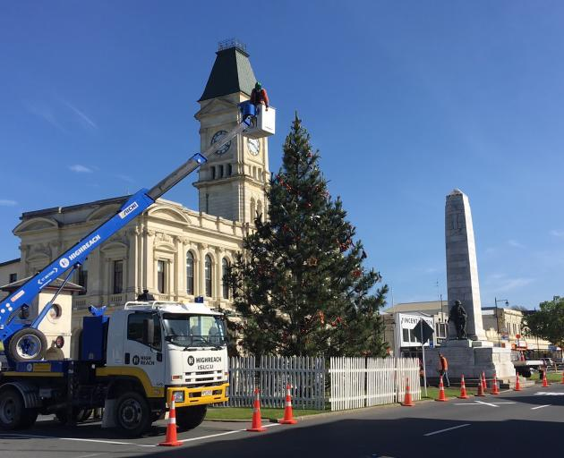 Oamaru's Christmas tree — a  wilding pine from the Waitaki Valley — has been put up in Thames St....
