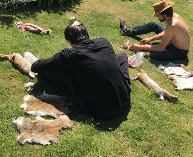Work begins on a rabbit skin blanket.