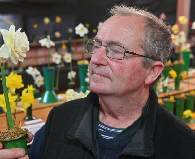 Alan Brown, of Waihola, shows off his manuka daffodil that won the champion of champion prize for...