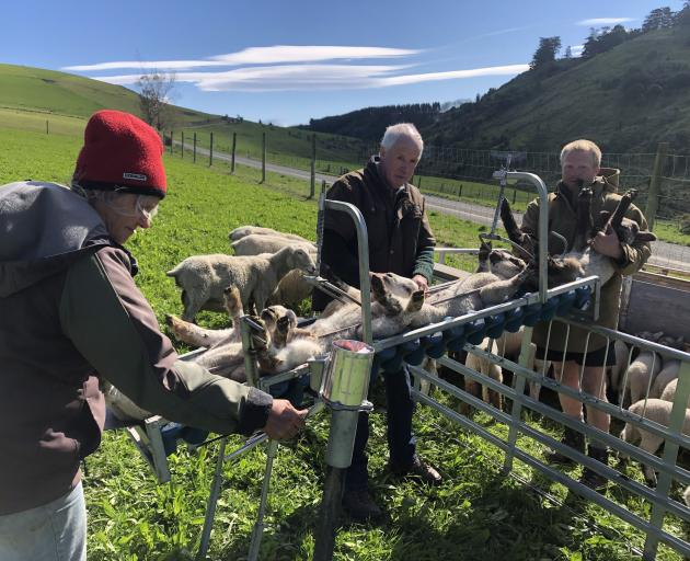 Jenny and Mark Chamberlain help son Simon tail lambs on his Hazelburn farm, a few minutes' drive...
