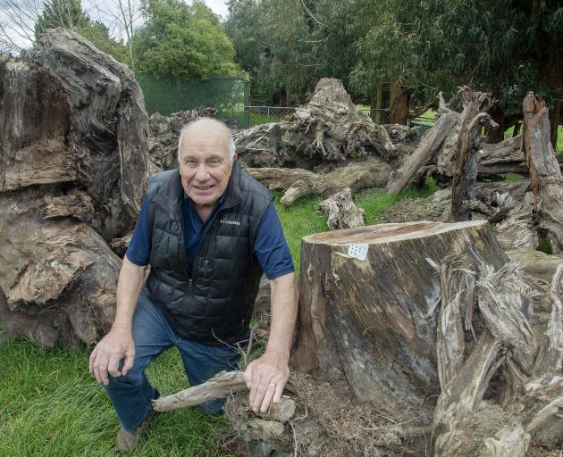 Halswell Residents' Association chairman John Bennett with the matai trees. Photo: Geoff Sloan   ...