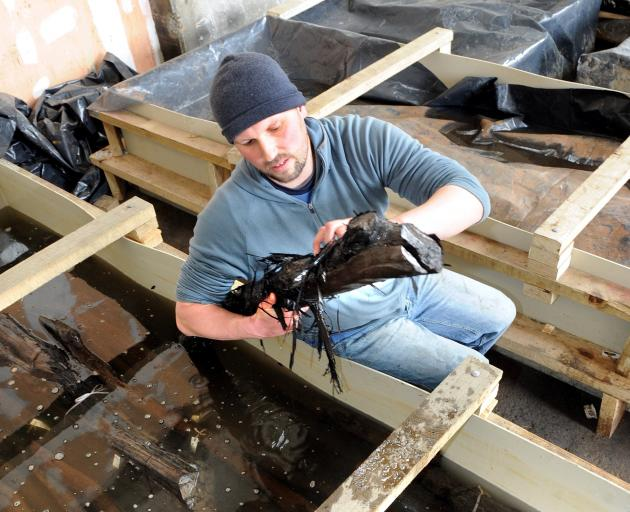 Archaeologist Jason Gay checks timber from the Wall Street causeway which was undergoing...