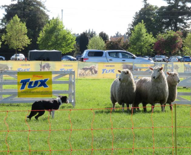 Top dog triallists are due to compete at the Tux dog trials at the Ashburton A&P Showgrounds at...