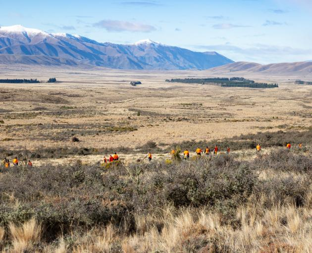 Wilding pine efforts near Twizel received the most funding, of $5,054,211, covering a 2512ha...