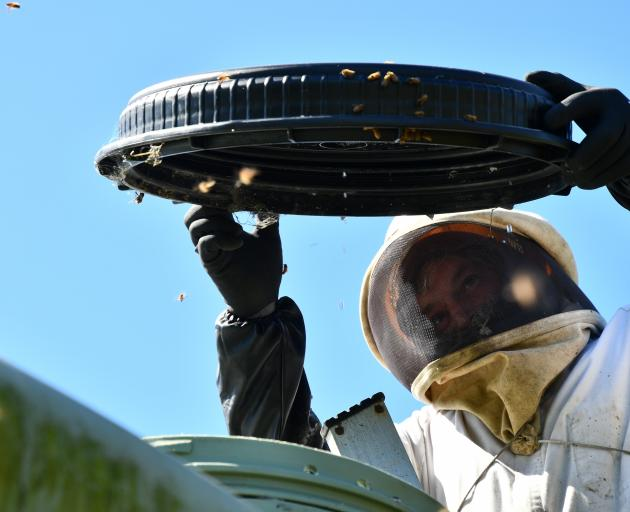 Southland Bee Society chairman Geoff Scott was called out to a swarm (below) that took over a...