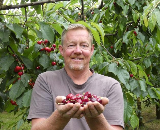 Cheeki Cherries/Dam Good Fruit owner Martin Milne holds some of this year's harvest. He remains...