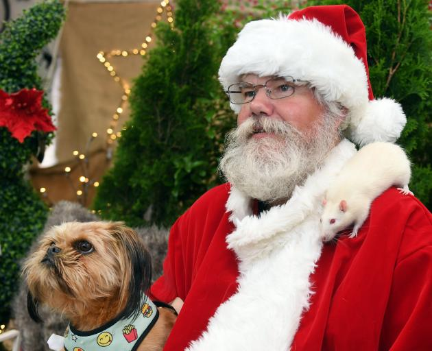 Ty has a photo taken with Santa at Nichol's Pet Centre, Dunedin, yesterday as a rodent friend...