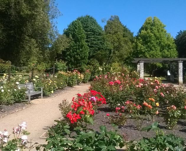 Dunedin Botanic  Garden curator Linda Hellyer is well down the pathway of greening the rose...