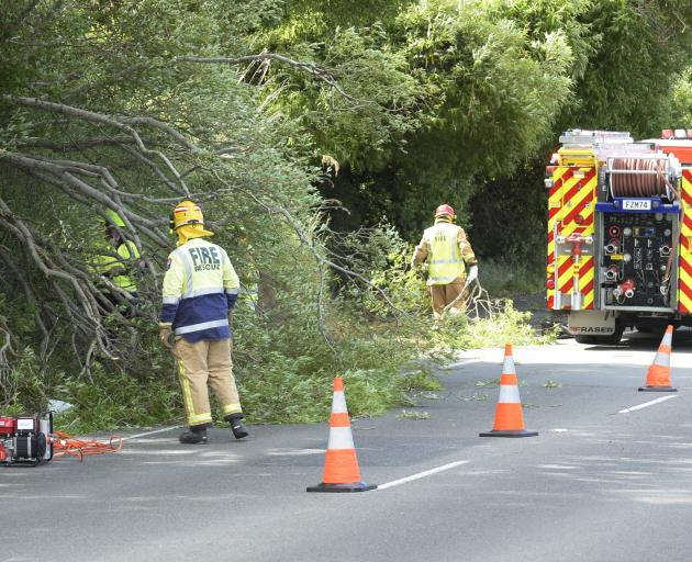 Firefighters were quick to remove a fallen tree that blocked one lane of State Highway 88 at...