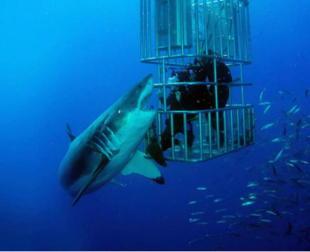 Shot from 'Shark Lockdown' featuring Clarke Gayford. Photo: Supplied