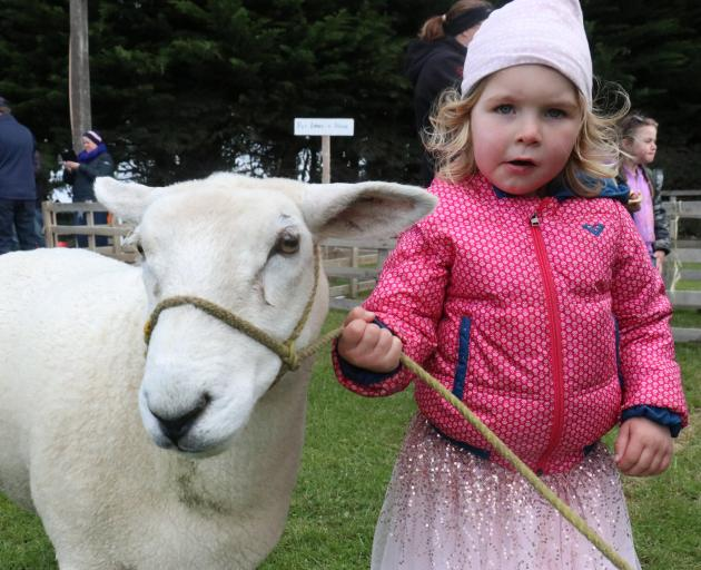 Pinky the sheep and her chaperone Frankie Nurse (3), of Dunedin. PHOTOS: JACK CONROY