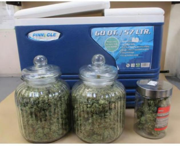 Two large chilly bins were located on the rear seat of the vehicle and were found to contain 1kg of cannabis head and over $500 in cash. Photo: Police