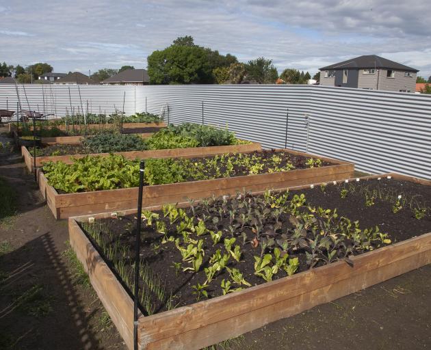 The Riccarton West Community Garden. Photo: Geoff Sloan