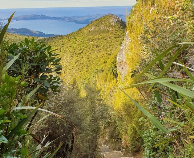 The high-quality Mt Cargill Track takes you through some beautiful bush. Photo: Clare Fraser