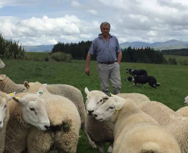 South Otago sheep breeder Garth Shaw with his Wharetoa Maternals. PHOTO: MARY-JO TOHILL
