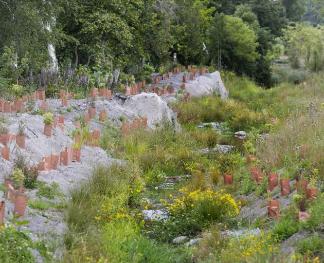 The council has received $1.5 million to help fund restoration work at Cashmere Stream. Photo:...