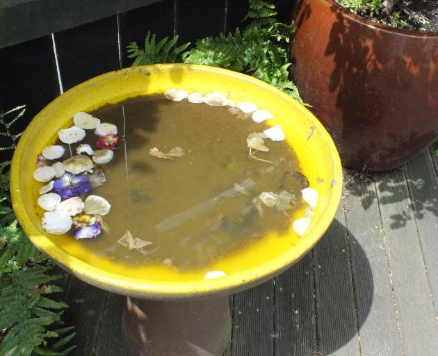 A bird bath collects fallen petals.