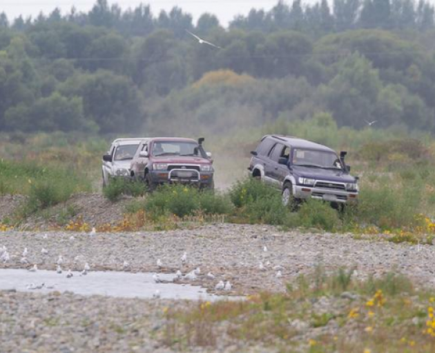 The culprits who ran over a gull colony in North Canterbury. Photo: Supplied / Ashley-Rakahuri...