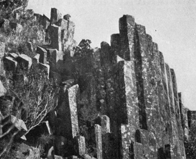 The remarkable but little-known basaltic columns on the Waitati slope of Mt Cargill. ...
