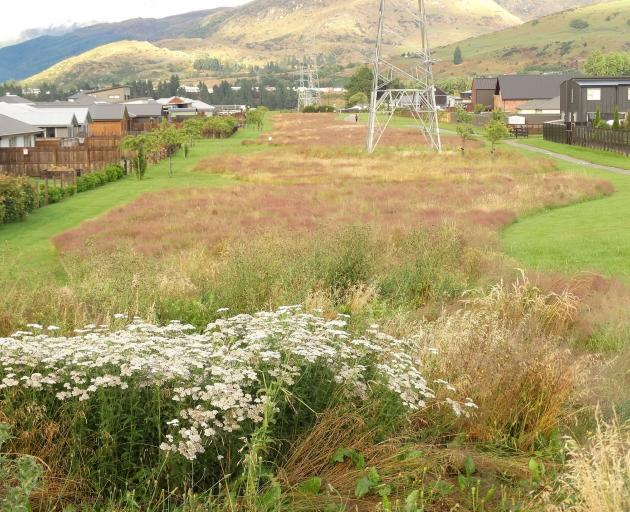 Views of ''low-mow'' trial areas in Shotover Country's Common Lane.