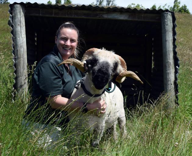 Woodland Farm owner Nikita Woodhead hugs her Valais blacknose stud ram Angus, who will appear at...