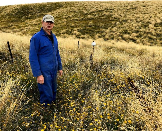 Avenel Station's Pat Garden (pictured) and son Nick oversowed a 500ha area with Maku lotus seed...