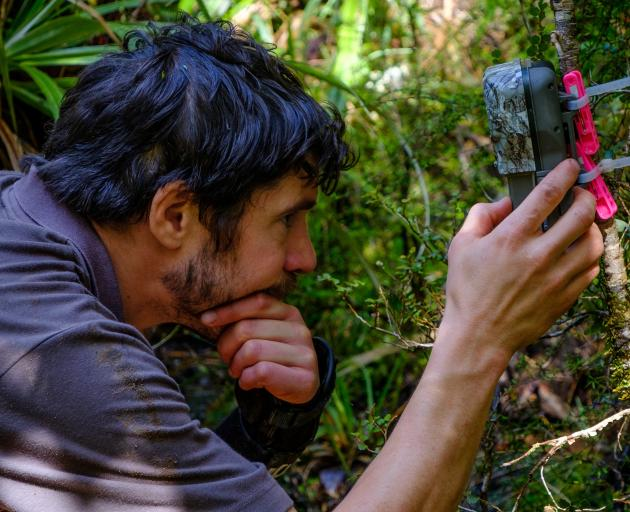 Department of Conservation ranger Tim Raemaekers checks a trail camera at a kiwi nest. PHOTO: TIM...