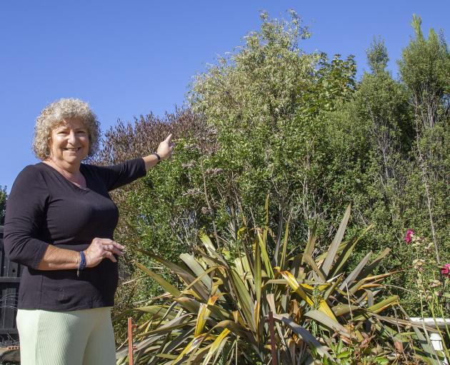 Liz Platt fell from this ribbonwood tree in her backyard trying to rescue cat Max.  Photo: Geoff...