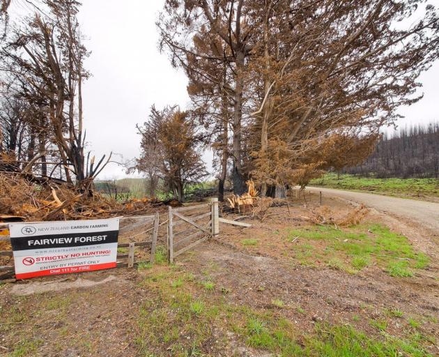 A blaze in a pine forestry block near Livingstone in October last year burnt through 611ha....