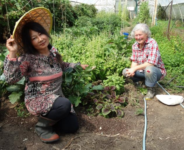 Raspberry Cottage owner Sarala Tamang (left) and its previous owner Margaret Little crouch beside basil growing at the Waimate farm. PHOTO: RUBY HEYWARD