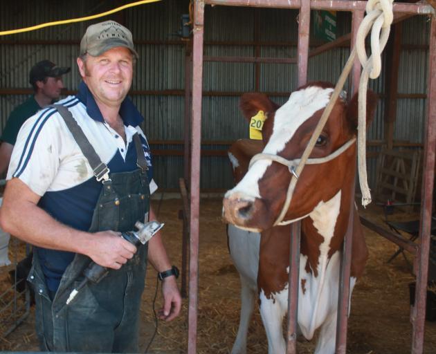 Tapanui farmer Bruce Eade prepares to exhibit 4-year-old ...
