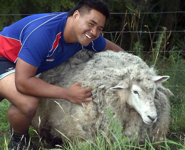 King's High pupil Steve Salelea with a very shaggy sheep he captured this week. PHOTO: PETER...