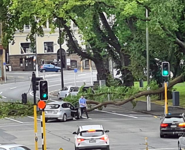 A couple get out of their car after it was nearly hit by a falling tree limb in Dunedin yesterday...
