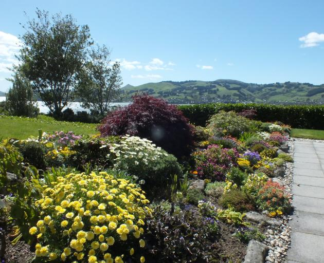 Rosalind Gibson's packed rockery has great impact from the house.