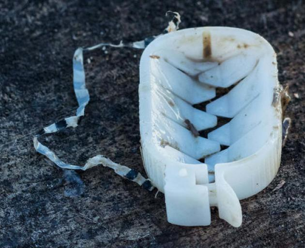 An oesophagus clip (or weasand clip) is a plastic oval about the size of a small thumb. Like a ghoulish Pac Man, it opens up to reveal two rows of spiky teeth, which clamp around a cow's oesophagus. Photo: Supplied via RNZ