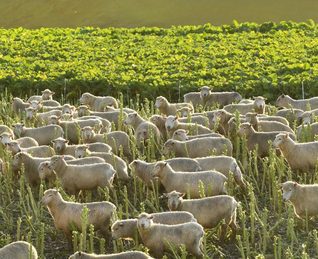 Beef + Lamb New Zealand's aim is for sheep and beef farmers to be recognised for the...