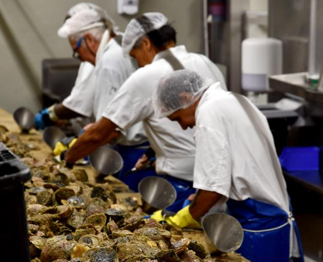 The team at Barnes Oysters are well practised at shucking oysters. PHOTO: LAURA SMITH
