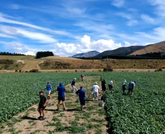 A cricket match is played in a swede paddock in Northern Southland.