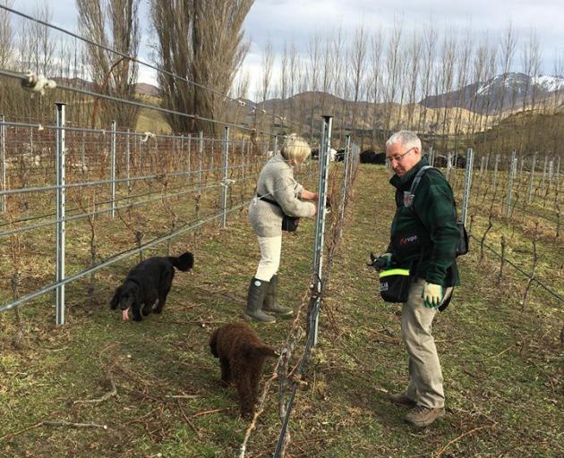 Marg Eton-Marsh and Gary Marsh at work in their vineyard. PHOTO: SUPPLIED