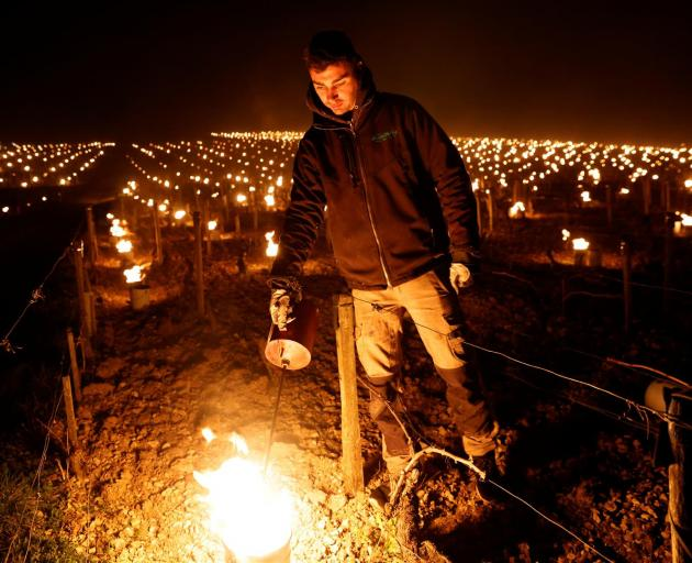 A wine grower lights heaters early in the morning, to protect vineyards from frost damage outside Chablis, France. Photo: Reuters
