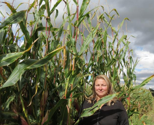 A large crop of maize towers over Tracy Paterson. PHOTO: ALEXIA JOHNSTON